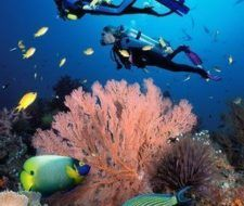 Lujo y agua: cruceros, snorkeling, buceo, diving