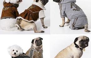Diseños de Roberto Cavalli para Perros