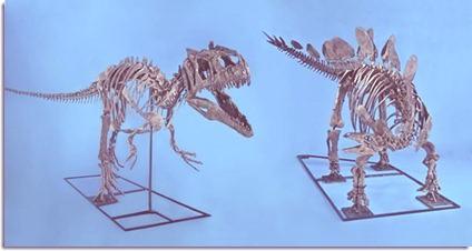 Fighting-dinosaur-skeletons